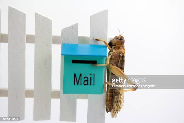 Animal on Wooden fence with a mailbox