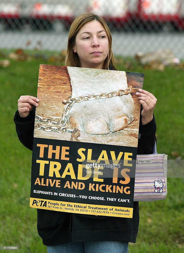 Animal rights activist Raeleynn Smith protests the Ringling Bros and Barnum Bailey circus elephant parade to the United Center November 15 2004 in...