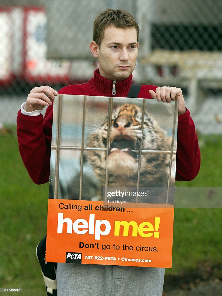 Animal rights activist Tony Madson protests the Ringling Bros and Barnum Bailey circus elephant parade to the United Center November 15 2004 in...