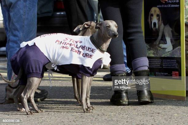 Animal rights activists and their dogs gather at Diss railway Station for a protest outside the pharmaceutical firm Huntingdon Life Sciences at...