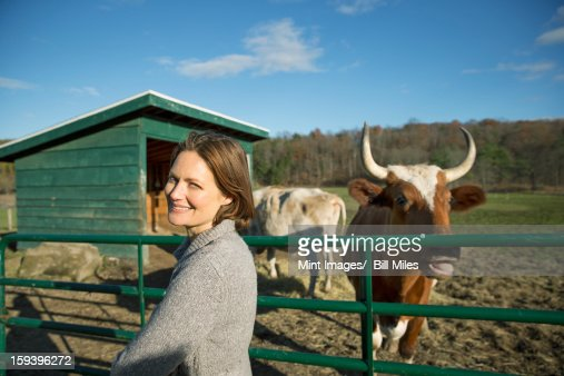 Animal sanctuary. A woman beside the fence, feeding two cows. : Stock-Foto
