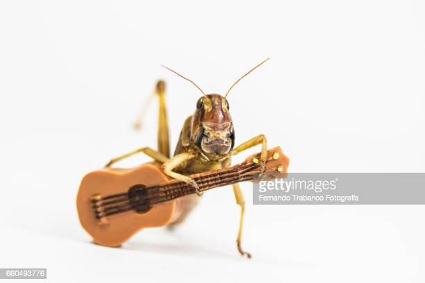 Animal singing and playing the guitar in flamenco concert