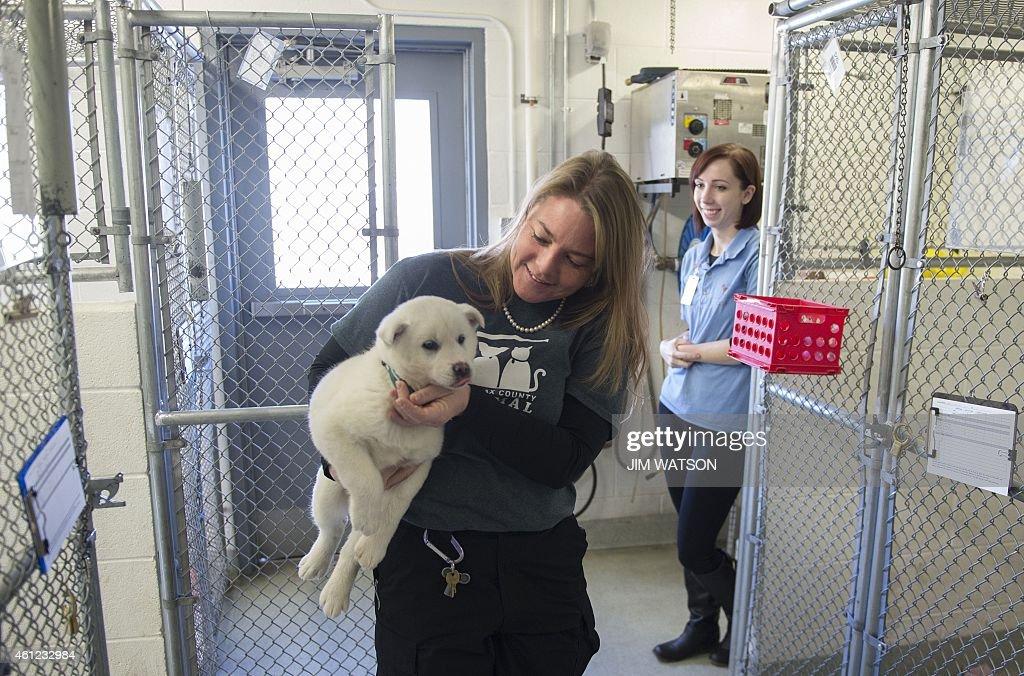 Animal Welfare League of Alexandria Adoption Associate Chelsea Lindsey looks on as Jenifer Lumpkin of Fairfax County Animal Shelter takes Snowball...