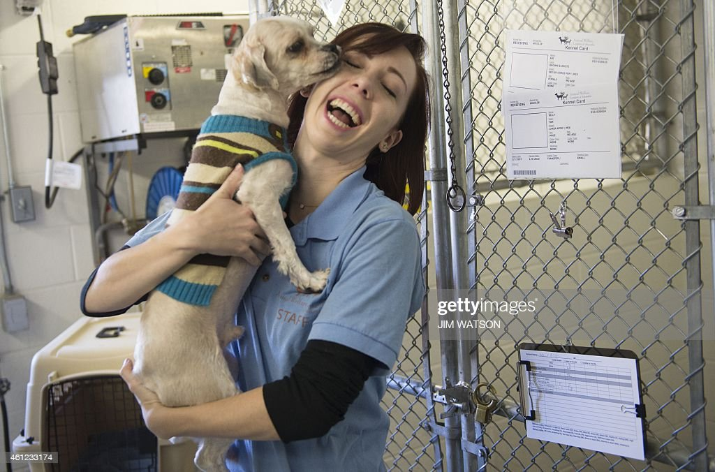 Animal Welfare League of Alexandria Adoption Associate Chelsea Lindsey plays with Billy one of 23 dogs rescued from South Korea at a shelter in...