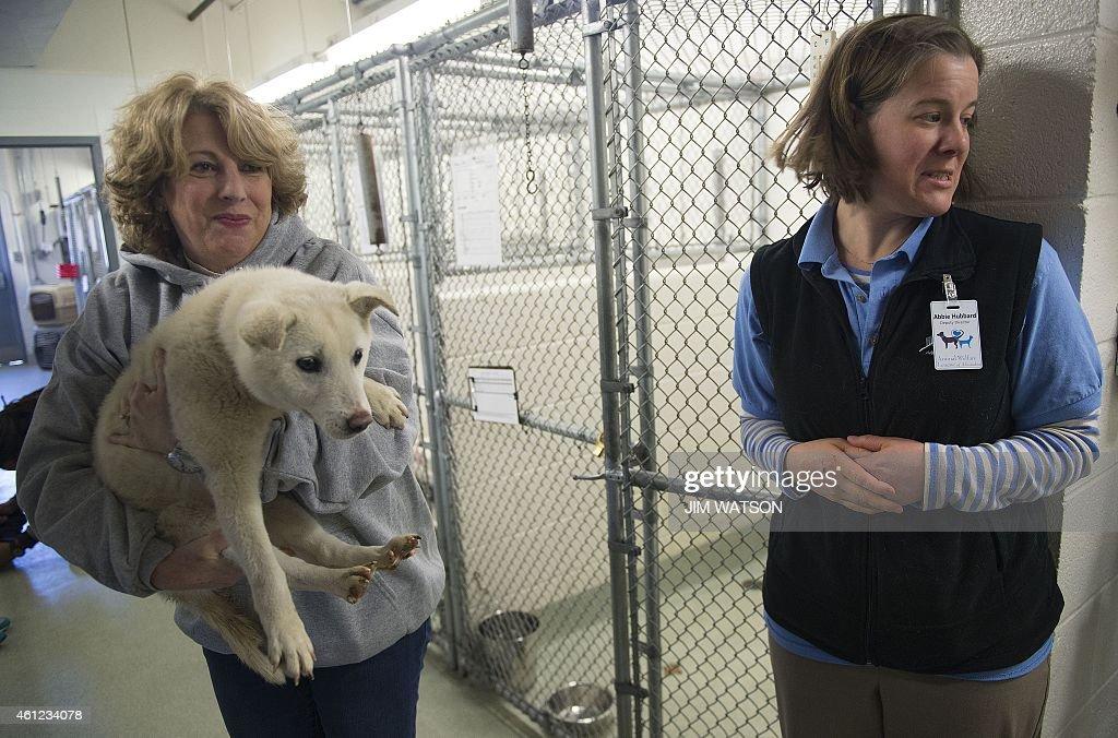 Animal Welfare League of Alexandria Director of Animal Care Abbie Hubbard looks away as Washington Animal Rescue League Chief Operations Officer Mary...