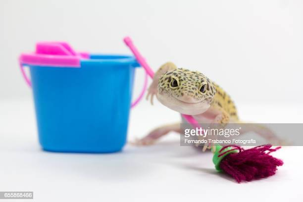 Animal with Bucketful and cleaning equipment standing in a domestic room.