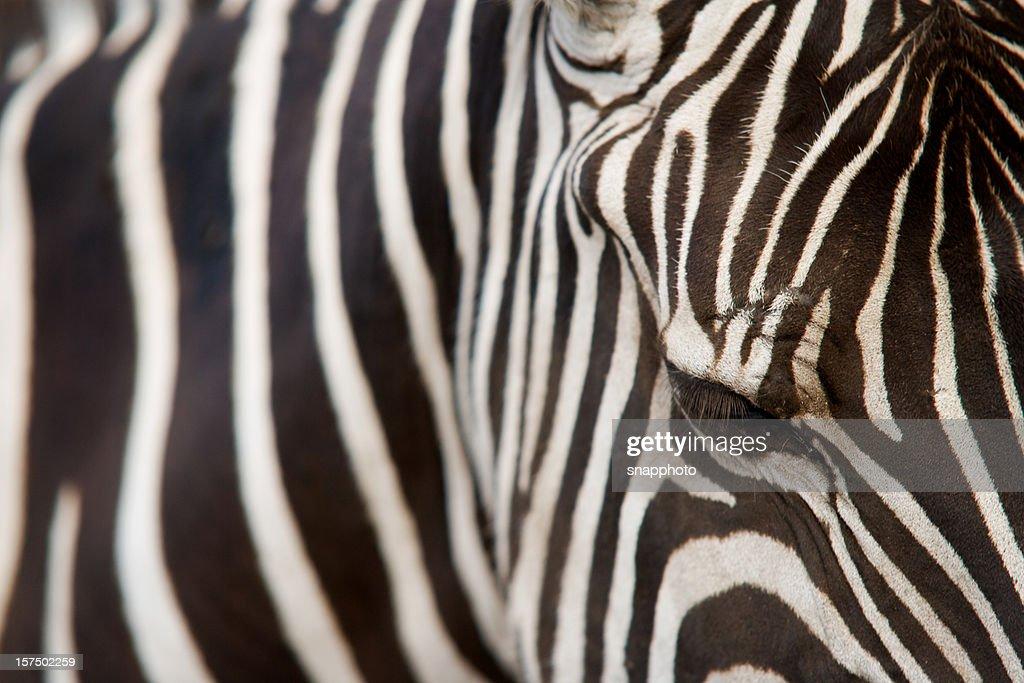Zebra Without Stripes Animal Zebra Stripes B...