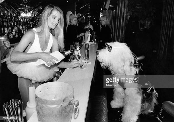 Animals Dogs Clothing Sammy in the Hippodrome VIP bar with his Bastet $300 coat being served a glass of champagne by the waitress July 1986 P006433