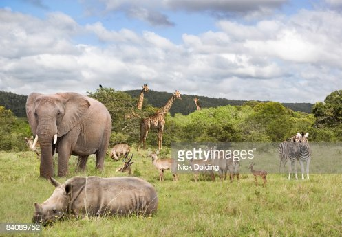 Animals in safari park : Stock Photo