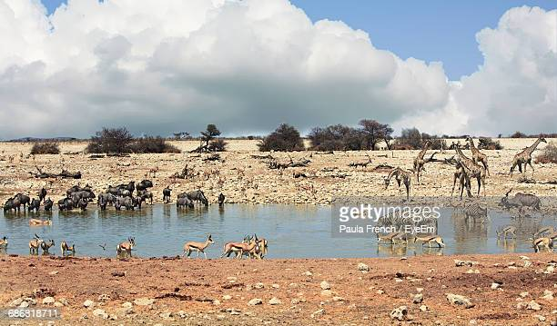 Animals In Waterhole Against Cloudy Sky At Etosha National Park