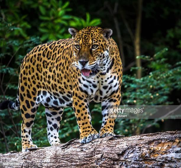 Animals - Mammals