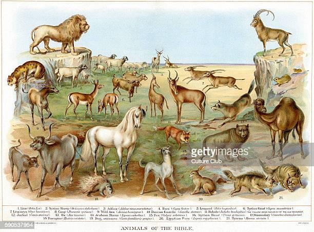 1 Lion 2 Syrian Sheep 3 Addax 4 Ibex 5 Leopard 6 Syrian Goat 7 Leucoryx 8 Cony 9 Wild Ass 10 Dorcas Gazelle 11 Bubale 12 Jackal 13 Ox 14 Arabian...