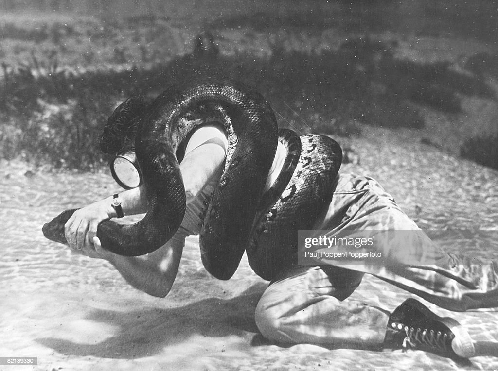 1955, American Ross Allen, who specialise in catching dangerous wildlife, tangles underwater with a 12 foot Anaconda snake