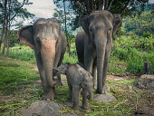 two elephants with young babies elephants