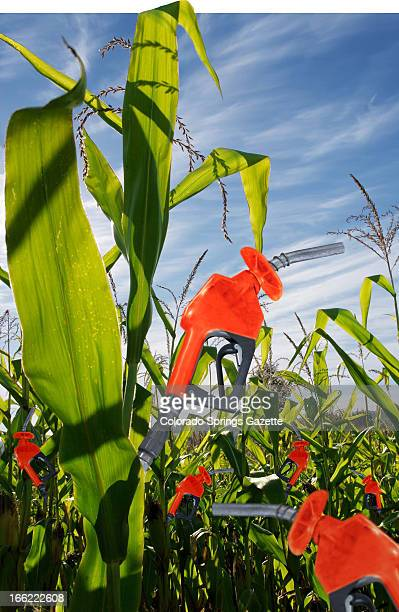 Anita Langemach color illustration of gas pumps growing in corn field The Gazette /MCT via Getty Images