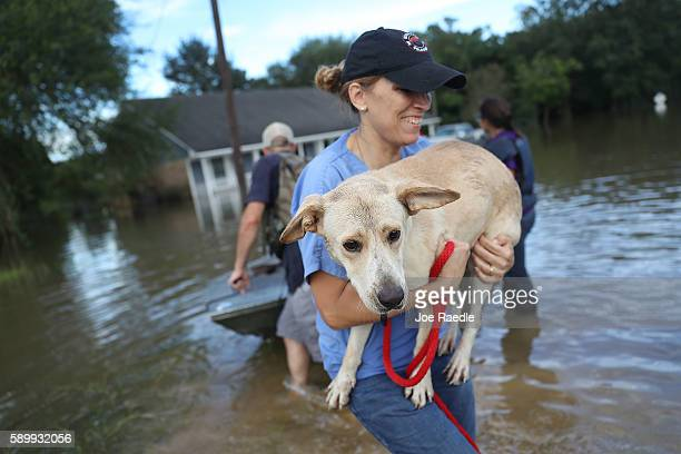 Ann Chapman from the Louisiana State Animal Response Team carries a dog she helped rescue from flood waters on August 15 2016 in Baton Rouge...
