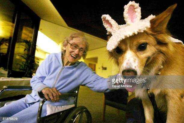 Anna Britton 88yearsold reaches out to Kirby a Pet Assisted Therapy dog dressed in a sheep Halloween costume while visiting with hospital patients at...