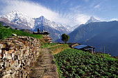 Annapurna mountain View from Ghnadruk Village Nepal, Fish tail mountain and Annapurna mountain.