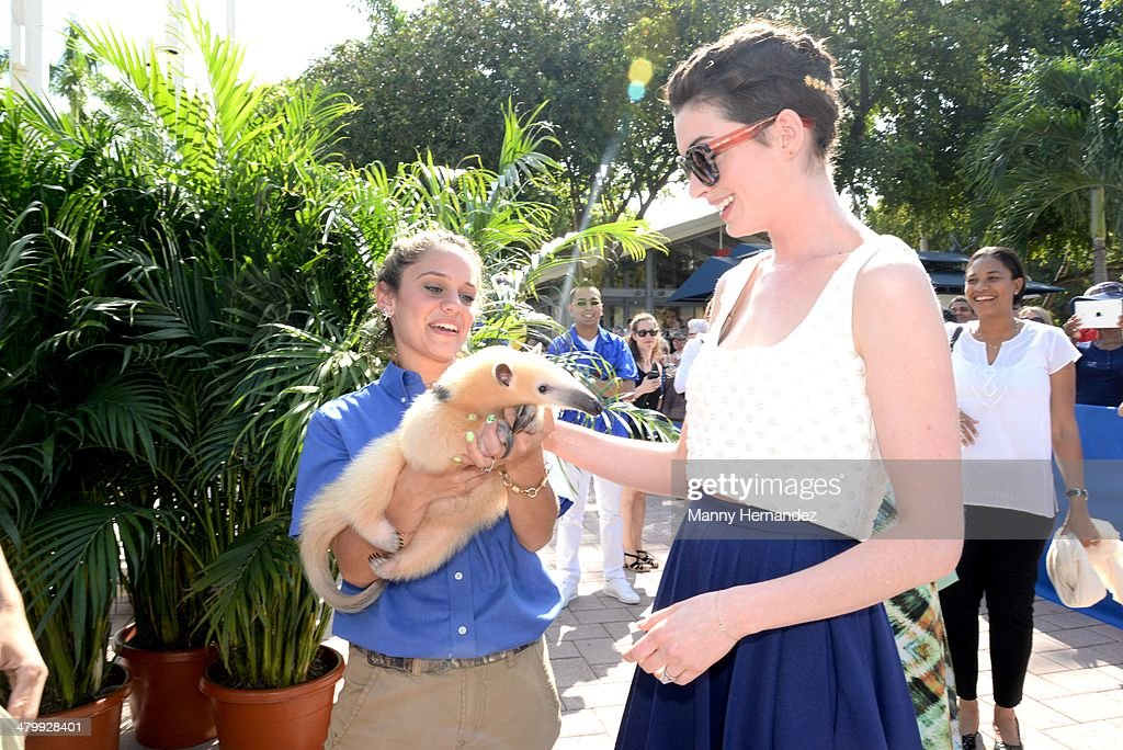 Anne Hathaway attends Miami Walk of Fame Inauguration at Bayside at Bayside Marketplace on March 21, 2014 in Miami, Florida.