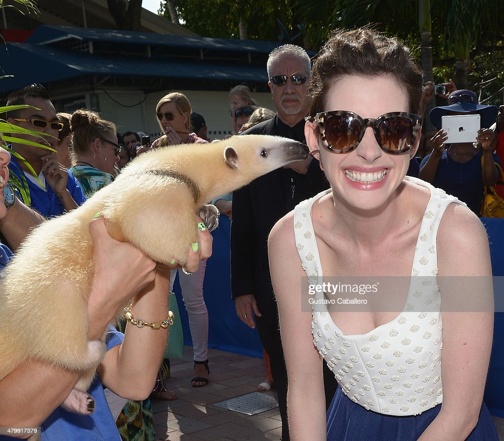 <a gi-track='captionPersonalityLinkClicked' href=/galleries/search?phrase=Anne+Hathaway+-+Actress&family=editorial&specificpeople=11647173 ng-click='$event.stopPropagation()'>Anne Hathaway</a> attends Miami Walk Of Fame Inauguration at Bayside Marketplace on March 21, 2014 in Miami, Florida.
