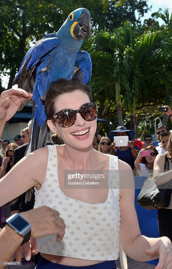 <a gi-track='captionPersonalityLinkClicked' href=/galleries/search?phrase=Anne+Hathaway+-+Actress&family=editorial&specificpeople=11647173 ng-click='$event.stopPropagation()'>Anne Hathaway</a> poses with a bird during the Miami Walk Of Fame inauguration at Bayside Marketplace on March 21, 2014 in Miami, Florida.
