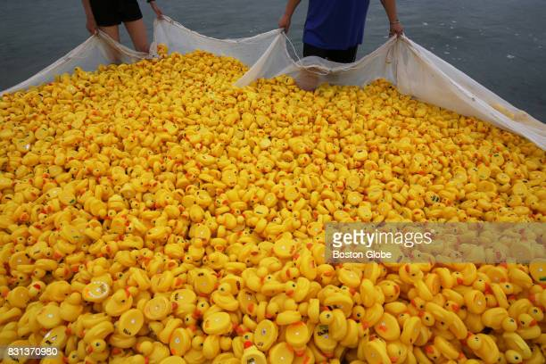 Anneliese Malachi left and Emily Fink uses a net to corral the 5876 rubber ducks before the Allens Pond Duck Derby on Barney's Joy Farm in South...