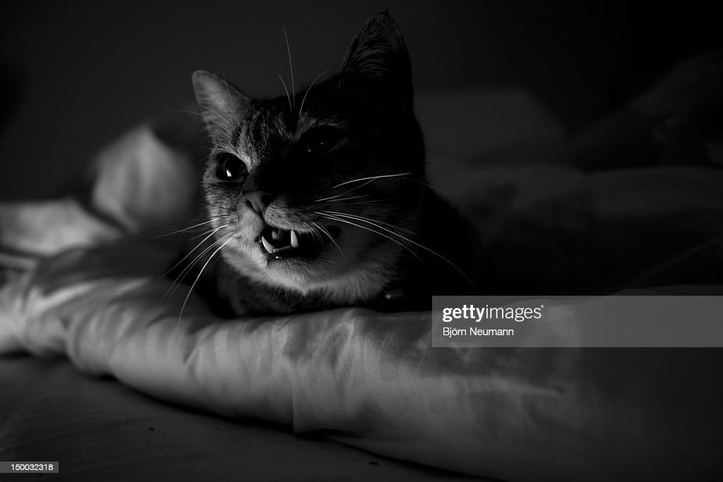 Annoyed cat : Stock Photo