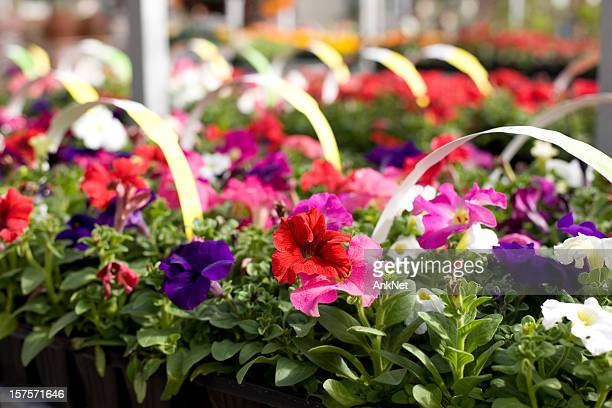 Annual flower sale event