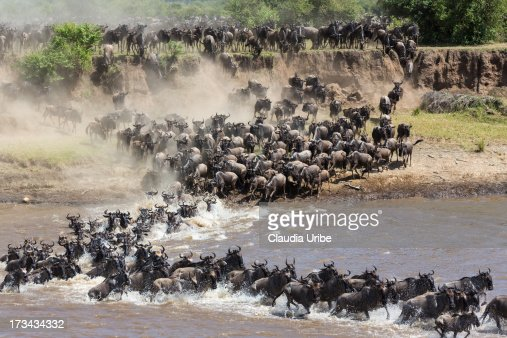 Annual Great Migration at the Serengeti.