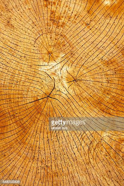 annual growth ring