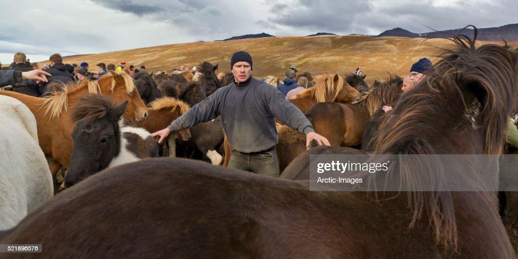Annual Horse Round Up-Laufskalarett, Skagafjordur, Iceland