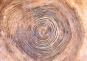The annual ring when a stump of the wood is beautiful
