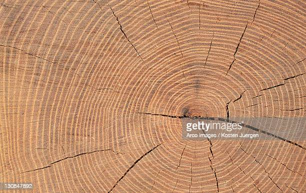 Annual rings of a tree