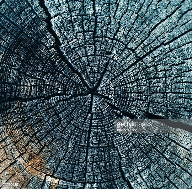 Annual rings on a tree trunk, close-up.