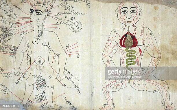 Anonymous and undated manuscript as Two Anatomical Drawings a bloodletting figure and a venous figure The work consists of two anatomical drawings...