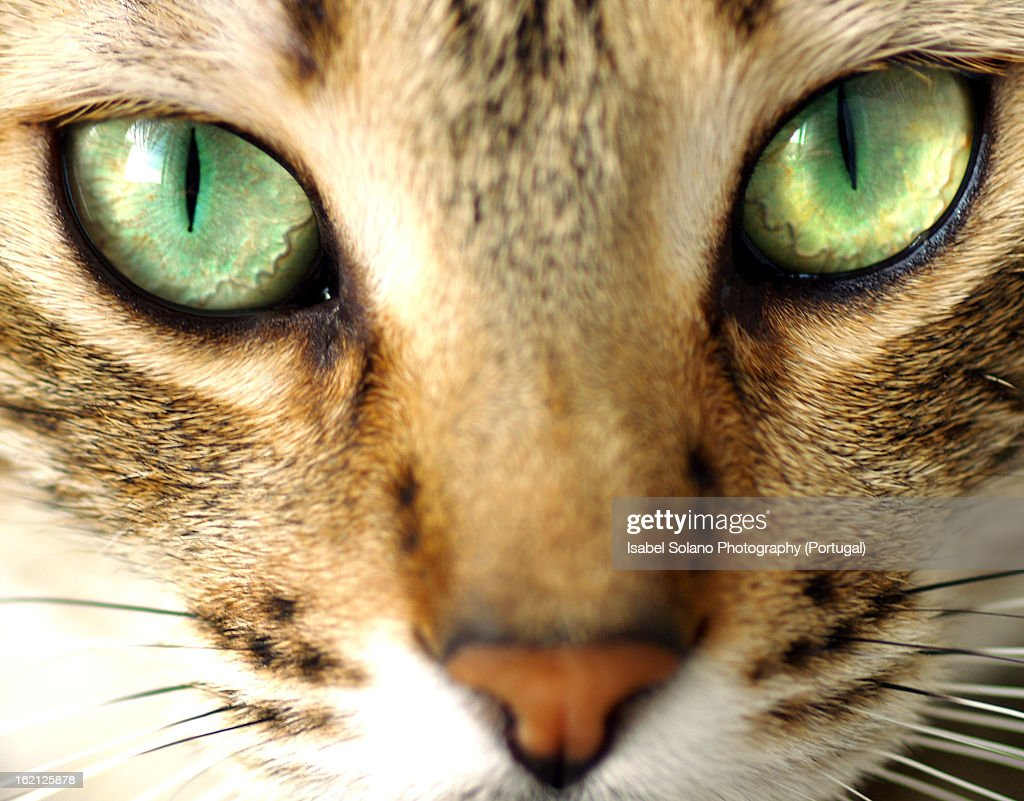 Another cat photo??? : Stock Photo