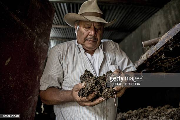 Anselmo Rodriguez collects cow dung to be processed with worms to make fertilizer and methane in a farm in Moravia 25 km northeast of San Jose on...