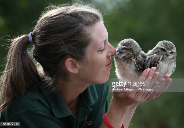 Ant and Dec the Burrowing Owls with keeper Laura Downie The owls are two of the newest members of the Bird of Prey Shows at Blair Drummond Safari Park