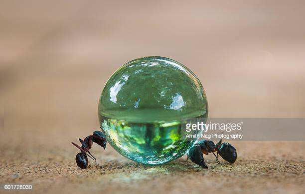 Ant and the Crystal ball