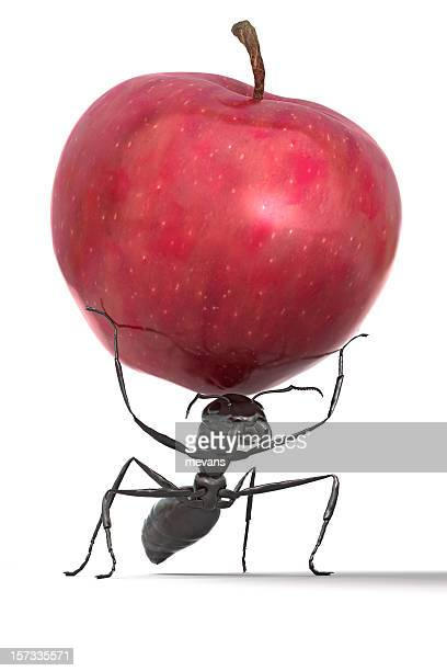 Ant Carrying an Apple