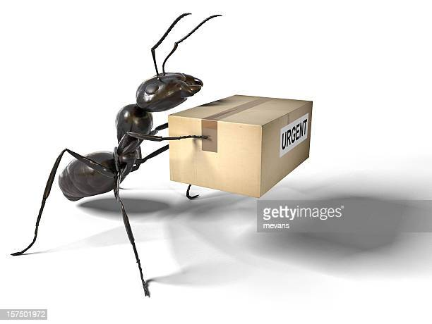 Ant Carrying an Urgent Package