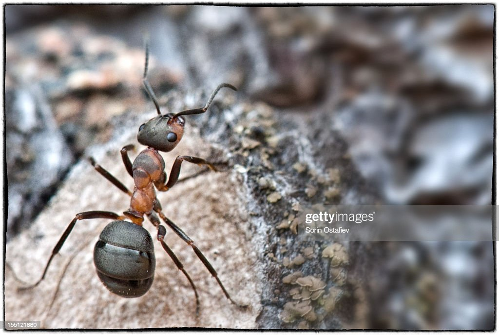 Ant on a tree : Stock Photo
