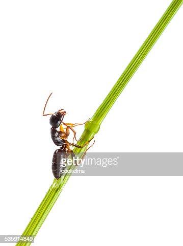 Ant : Stock Photo