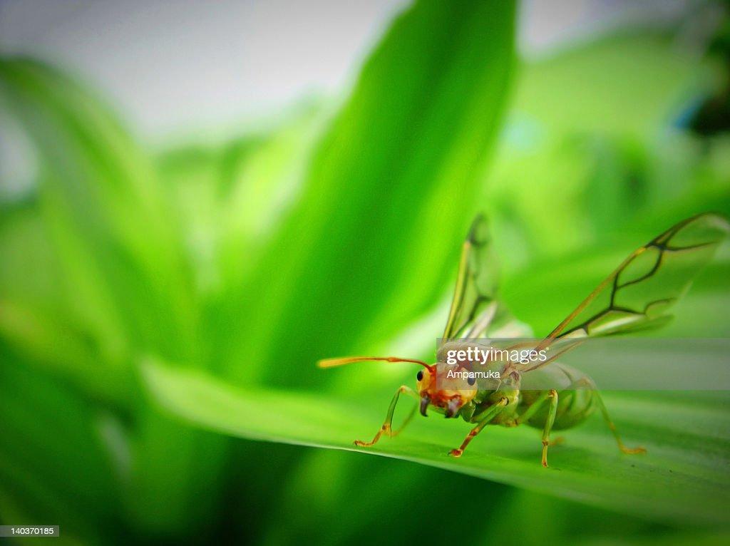 Ant Queen : Stock Photo