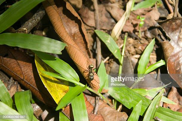 Ant walking on leaf on forest floor, overhead view
