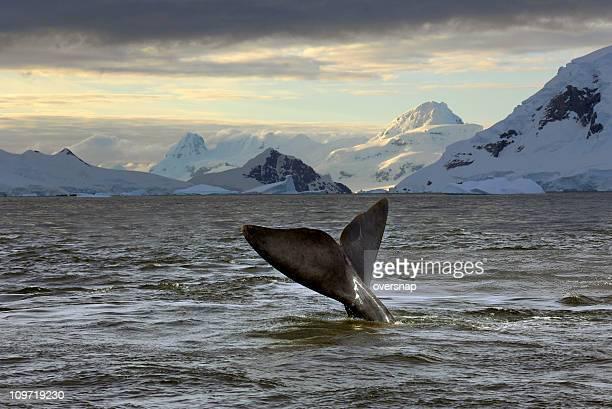 南極の夕暮れ