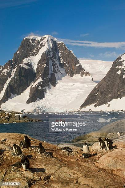 Antarctica Antarctic Peninsula Penola Strait Petermann Island Gentoo Penguin Colony With Chicks Zodiac With Tourists