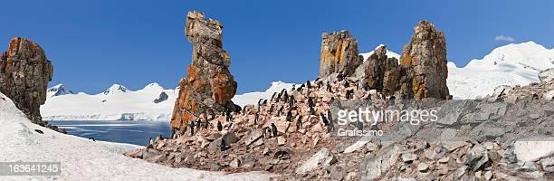 Antarctica chinstrap penguin colony panorama