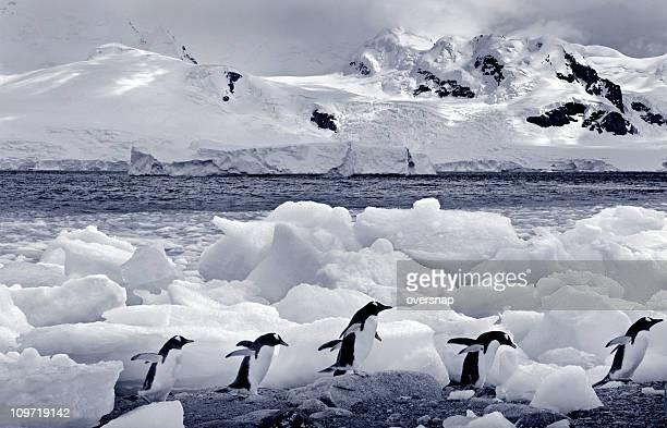 Antarctica in monochrome