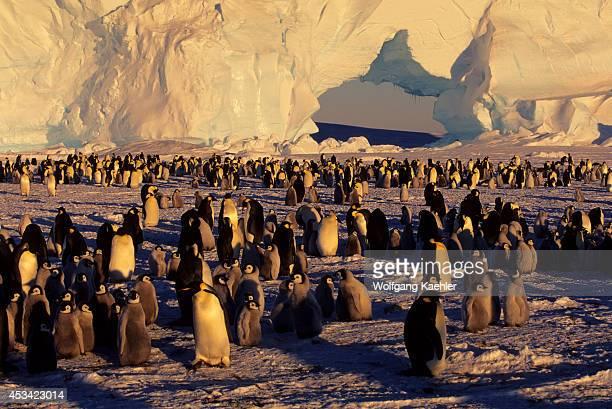 Antarctica Jelbart Ice Shelf Atka Iceport Emperor Penguin Colony Iceberg With Arch